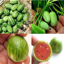 10X Cucamelon Mini Watermelon Red Miniature Seeds Fruit Plant Home Garden DFBG$