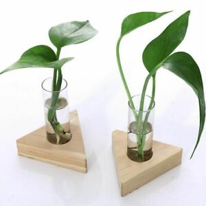 Test Tube Glass Vase Plant Wooden Stand Modern Flower Potted Holder Rack Decors
