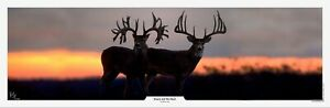 Beauty and the Beast Whitetail Print by Robert King - FREE SHIPPING
