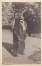Postcard Rppc Yosemite National Park Bear Standing Unused Real Photo