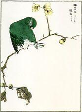 2 Japanese Woodblock Reproductions:Kashu:Robin & Rubythroat  - 2 Fine Art Prints