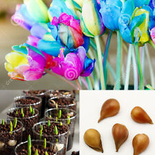 5pcs Colorful Tulip Bulbs Seeds Beautiful Rare Flower Seeds Garden Decoration