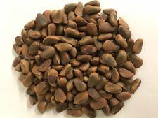 Roasted Cedar Pine Nut with Shell.