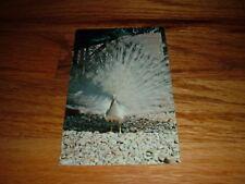 Beautiful White Peacock Sunken Gardens Tourist Location Spot New Old Postcard