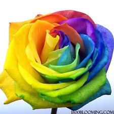 Fresh Cut Tinted Rainbow Roses, Flower Delivery,Bouquet-Event-Di y-Bulk (12-100)