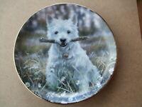 Porzellan Hundeteller Westie Wandteller Sammelteller Westie Stöckchen  Neu
