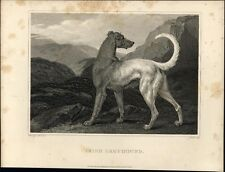 Irish Greyhound image c 1820 fine antique engraved print