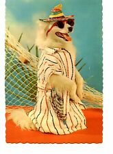 Cute Posed Dressed Dog Ready for Swimming Pool-Sunglasses-Hat-Vintage Postcard