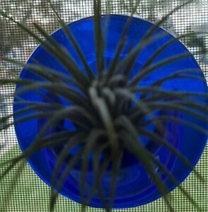 """Pocket vase with 1 airplant 3"""" circle with 1 1/2"""" pocket window decoration"""