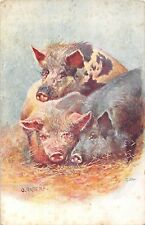 POSTCARD   ANIMALS   PIGS        O  ANDERS