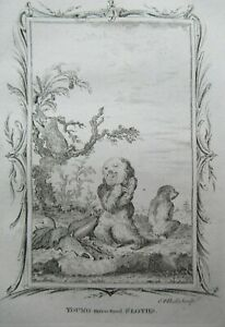 Young Three Toed Sloth Antique Print Copper Plate Engraving Buffon 1791