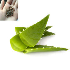 100 Seeds Aloe Vera Seed Edible Succulent Plant Rare Medicinal Herbal Vegetables