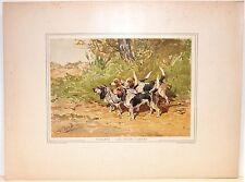 Stampa antica grande CANE BEAGLE Caillard 1890 Old antique print dogs