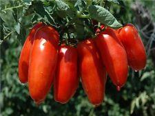 100/PCs Package Tomato Seeds SAN Marzano Superior Taste, Disease Resistant Garde