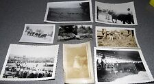 Vintage Black & White Photo Lot Of 8 Cattle Cow Related Images 50's Era #3
