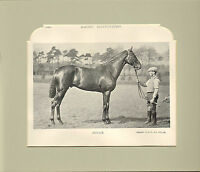 """1896 racing illustrated print mounted ! titled """" boxer   """""""