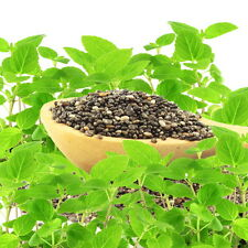 Der Spanische Salbei ist der Lieferant für die wertvollen Chia-Samen.