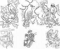 30 * Vögel * Malvorlagen - DIN A 4