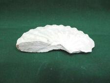 Ammonite - Fossile