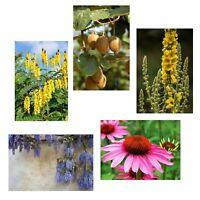 Frühlings-Spar-Angebot: 5 tolle winterharte Samensorten für den schönen Garten !