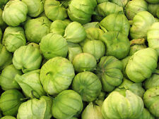25 Organic Heirloom Tomatillo Seeds, Physalis philadelphica, Mexican Husk Tomato