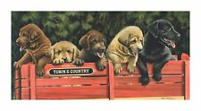 "24 ""All Aboard"" Lab Puppies 20x36 Print by Robert Metropulos"