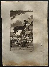 1799 - Buffon - Le Bitbok mâle - Gravure zoologie