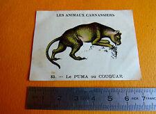 CHROMO 1939 CASINO LES ANIMAUX CARNASSIERS N°83 PUMA COUGUAR