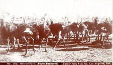 Boudoir cabinet photo Ostrich Farm,S. Pasadena, Garden City Foto Co. L.A. CA.