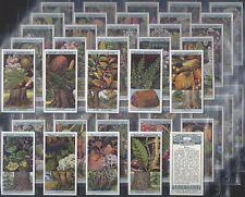 WILLS-FULL SET- FLOWERING TREES & SHRUBS (50 CARDS) - EXC