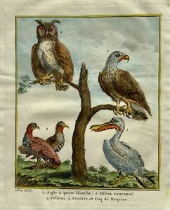1750 Prevost - White Tailed Eagle Crowned Owl Pelican Partridge