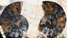 1151 RARE 1 in 100 BLACK Ammonite PAIR Deep Crystals MEDIUM FOSSIL 28grams 45mm