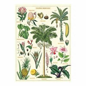 Cavallini Tropical Plants Vintage Poster | Wall Art Print Craft Wrap Luxury