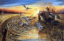 "Ray Mertes ""Evening Refuge"" Mallard Duck Farm Country Art Print  29"" x19"""