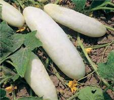 Heirloom WHITE WONDER Cucumber ✮100 SEEDS✮High Yields✮Fresh & Pickling ✮Tasty