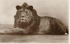 VINTAGE postcard: 'ABDULLA' THE LION AT LONDON ?  ZOO