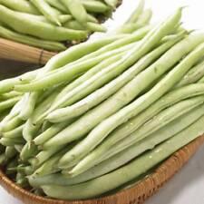 Green Bean Seed 15 Seeds Snap Bean Phaseolus Vulgaris L. Vegetables Seeds C133