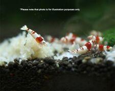 Taiwan Snow Shrimp Organic Barley straw Nutrients Food of CRS crystal red shrimp