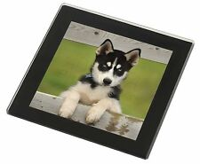 Husky Puppy Dog Black Rim Glass Coaster Animal Breed Gift, AD-H67GC