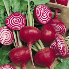 1/4 Lb Chioggia Beet Seeds - Everwilde Farms Mylar Seed Packet
