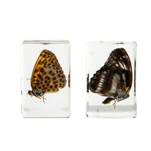 Natural Butterfly Amber Resin Crafts Insects Stone Ornament Decoration Gizh