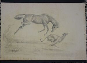 """ICONIC SIGNED 1952 JULIET McLEOD THOROUGHBRED HORSE & GREYHOUND SKETCH ~22""""x15"""