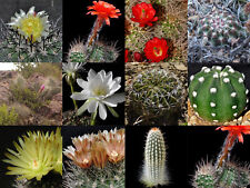 Cactus huge selection of mixed fresh seeds! Collection starter! #8466#9