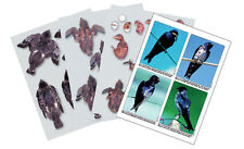 Purple Martin Laminated Photos 7 pages of life-size photos