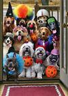 Avanti Trick or Treat Dogs Funny / Humorous Halloween Card photo