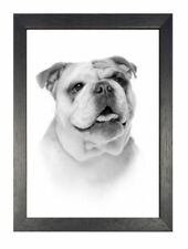 Dealer or Reseller Listed Animals Modern Art Prints