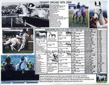 Race Horse Famous  English Steeplechaser Desert Orchid picture pedigree photo