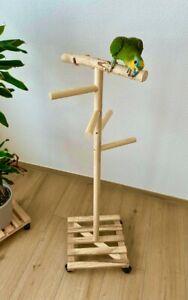 Freisitz für Papageien, Papageienspielzeug, 1.20m, Kiefer/Birkenholz