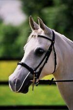 Cavezze e capezze bianco per il cavallo