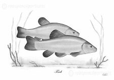 TENCH ( Tinca Tinca ) Limited Edition Art Print Unique Gift For Tenchfisher